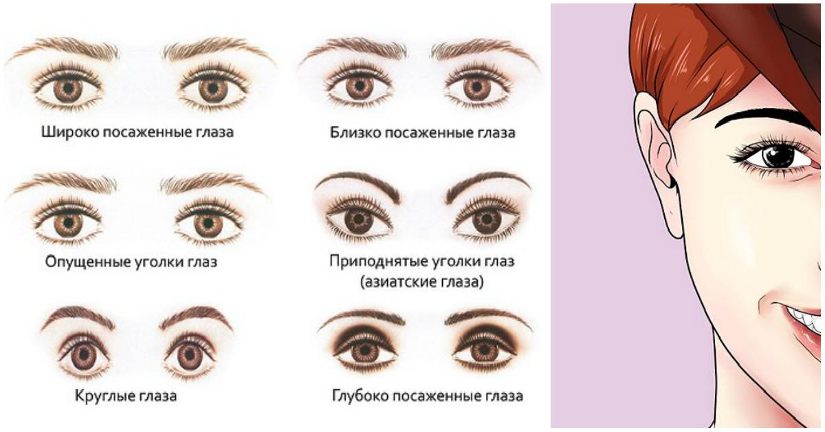 формы глаз фото и названия итоге повреждаются листья